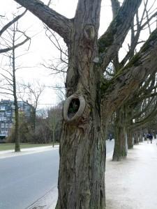 I Amsterdam vokser træerne ind i himlen og tulipanerne vokser ind i træerne