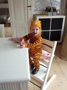 Tigertutten klar til at overfalde noget frokost!