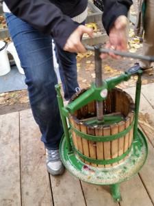 Og til slut blev æblestykkerne most så saften løb ned i en kande...