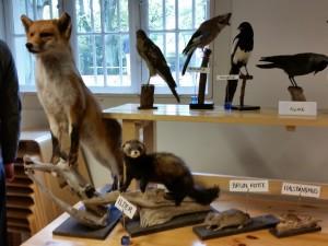 Der var udstilling med udstoppede dyr