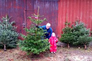 Ida og Farfar har fundet juletræet!