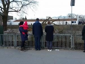 Familien kigger på løverne