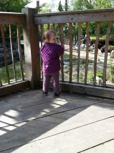 Maya kigger på dyr i Zoo