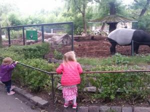 Betragter myresluger i zoo