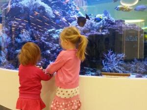 Kigger på fisk på Fisketorvet
