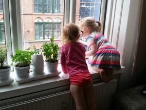 Pigerne ved siden af krydderurtehaven