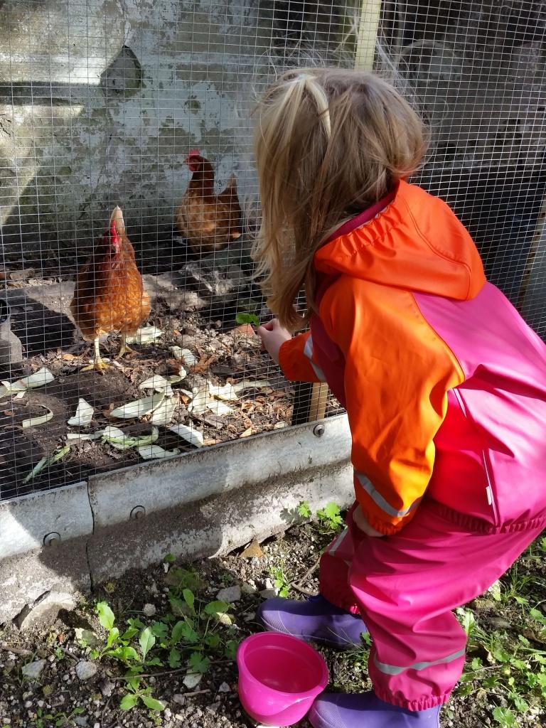 Ida og Maya fodrede Mor og Gretes høns