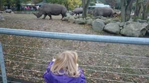 Ida beskuer de gigantiske næsehorn