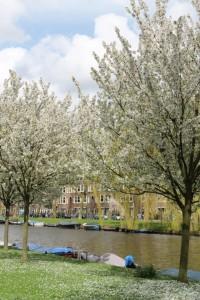 Forår med udsprungne blomster i træerne