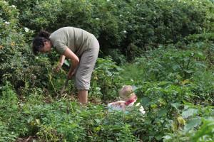 Ida hjælper Bedste Grete med at grave kartofler op