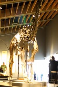 Dinosauren Misty (som er så stor at Mor ikke kunne fange hele dinoen på et billede med den linse hun havde på kameraet!)