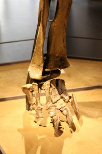 Dino-fod