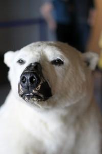 Halløj isbjørn!