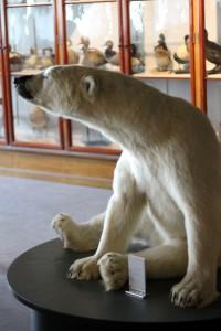 Pludselig sad der en isbjørn på et bord - frit klappe-tilgængelig!